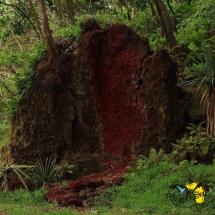 Terre rouge à l'anse des cascades.