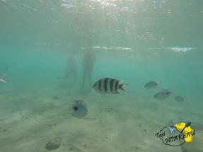 Sous la Mer avec les poissons